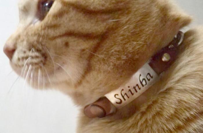 PET NamePlate